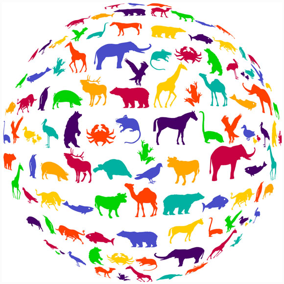colorful animals in the animal kingdom