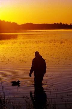 duck hunting decoy