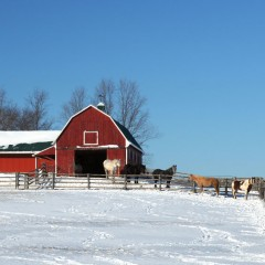 Red Barn and Horses