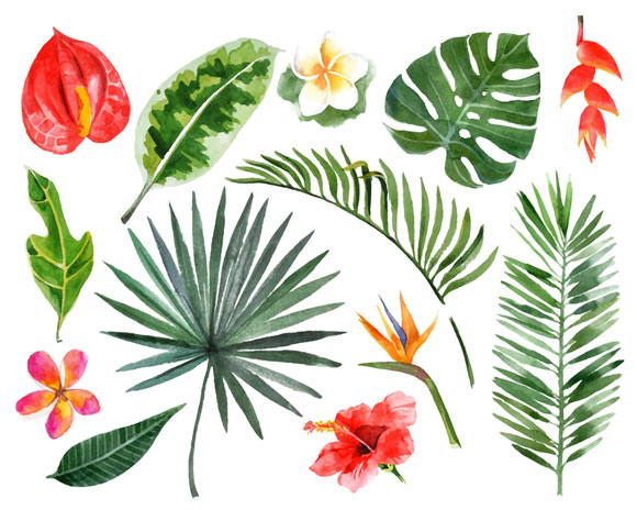 tropical plant leaves and flowers